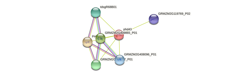 PHD43 protein (Zea mays) - STRING interaction network