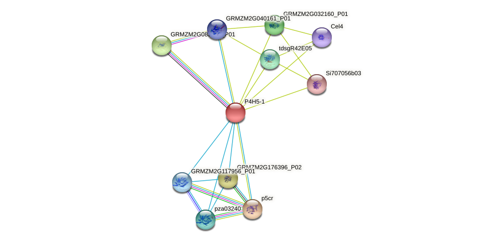 P4H5 protein (Zea mays) - STRING interaction network