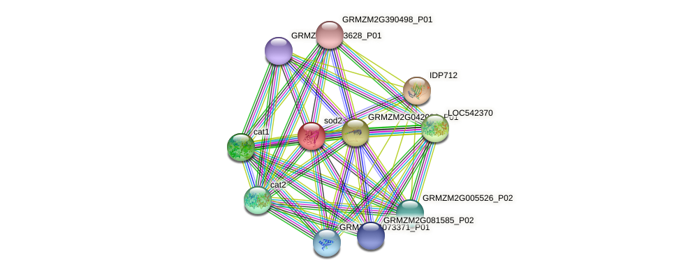 SODCC.1 protein (Zea mays) - STRING interaction network
