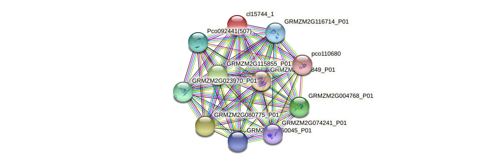 cl15744_1 protein (Zea mays) - STRING interaction network