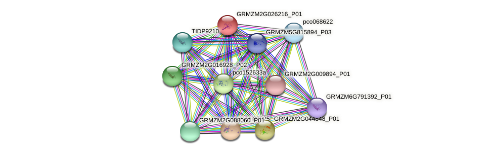 GRMZM2G026216_P01 protein (Zea mays) - STRING interaction network