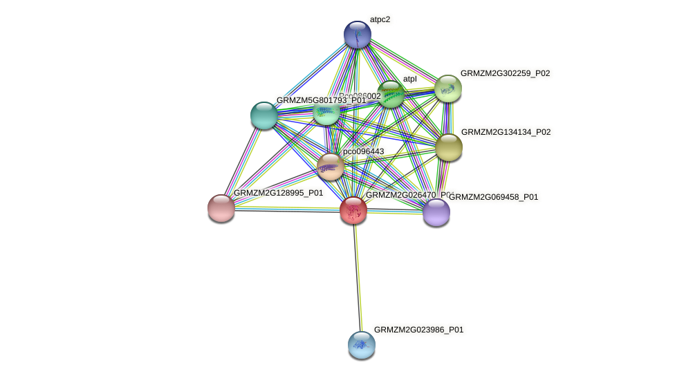 GRMZM2G026470_P01 protein (Zea mays) - STRING interaction network