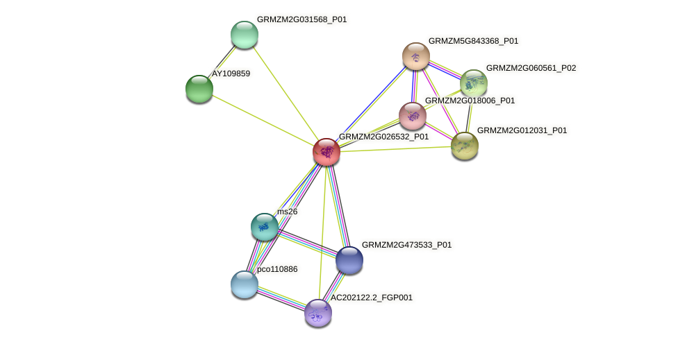 GRMZM2G026532_P01 protein (Zea mays) - STRING interaction network