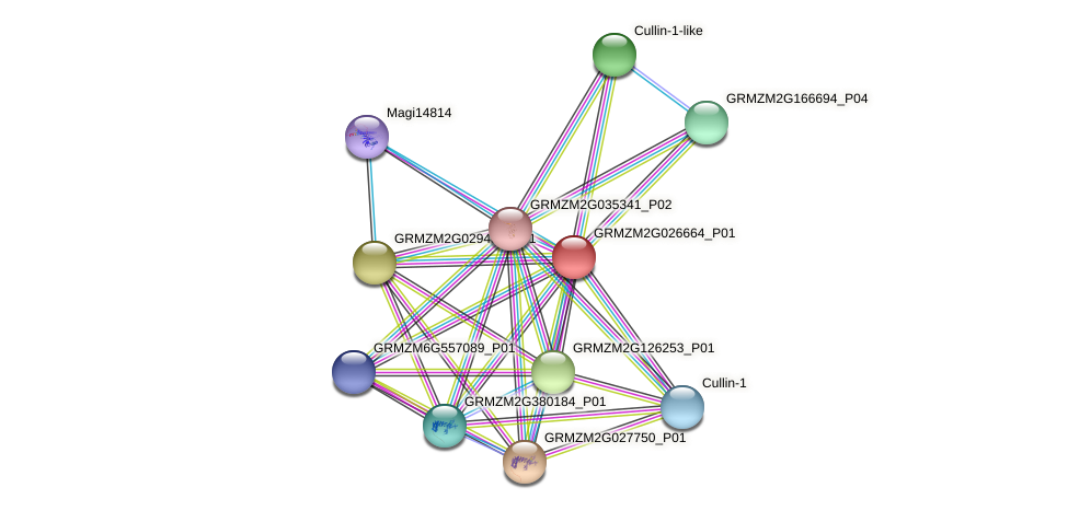 GRMZM2G026664_P01 protein (Zea mays) - STRING interaction network