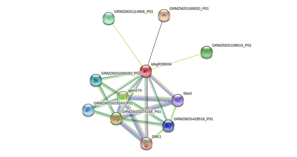 GRMZM2G026889_P01 protein (Zea mays) - STRING interaction network