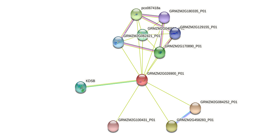 GRMZM2G026900_P01 protein (Zea mays) - STRING interaction network