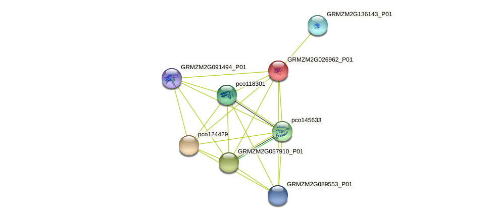 GRMZM2G026962_P01 protein (Zea mays) - STRING interaction network