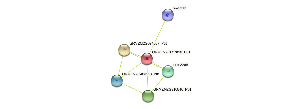 GRMZM2G027016_P01 protein (Zea mays) - STRING interaction network