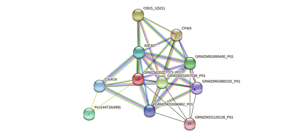 GRMZM2G027021_P01 protein (Zea mays) - STRING interaction network