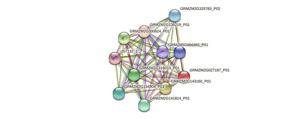 GRMZM2G027187_P01 protein (Zea mays) - STRING interaction network