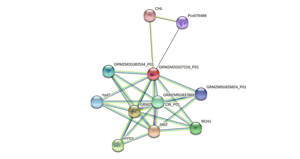 vde1 protein (Zea mays) - STRING interaction network