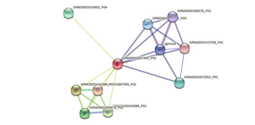 GRMZM2G027603_P01 protein (Zea mays) - STRING interaction network