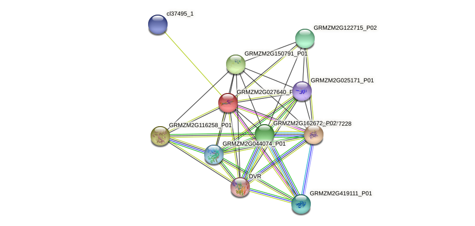 GRMZM2G027640_P01 protein (Zea mays) - STRING interaction network