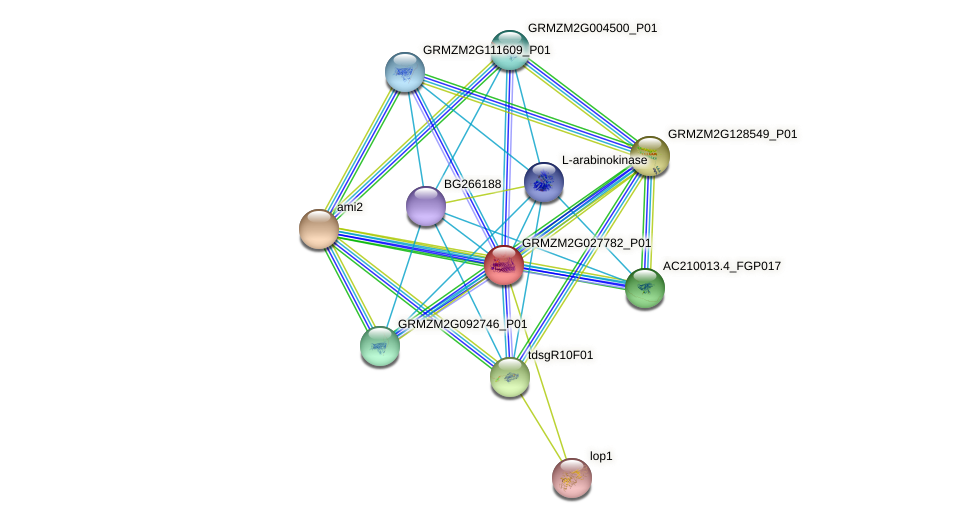 GRMZM2G027782_P01 protein (Zea mays) - STRING interaction network