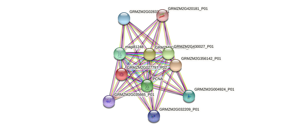 GRMZM2G027797_P01 protein (Zea mays) - STRING interaction network
