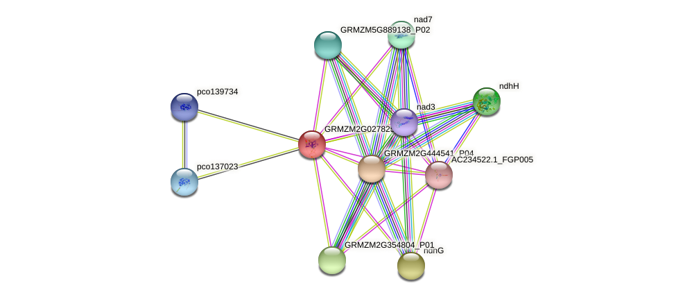 GRMZM2G027825_P01 protein (Zea mays) - STRING interaction network