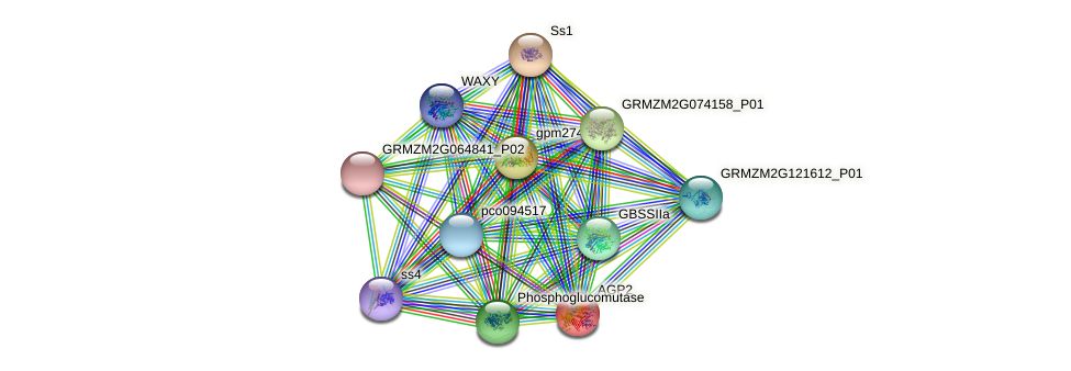 AGP2 protein (Zea mays) - STRING interaction network