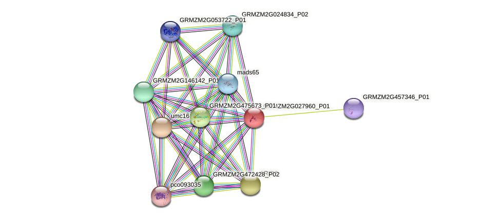 GRMZM2G027960_P01 protein (Zea mays) - STRING interaction network