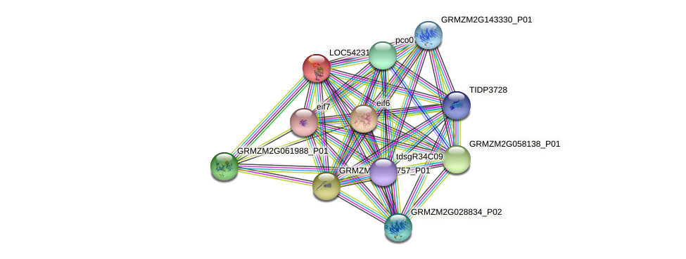 tif-4A3 protein (Zea mays) - STRING interaction network