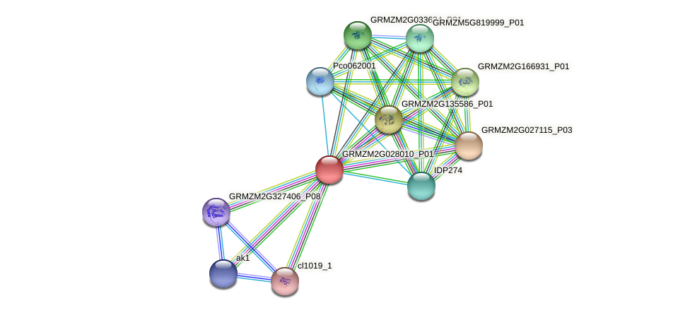 Zm.33176 protein (Zea mays) - STRING interaction network