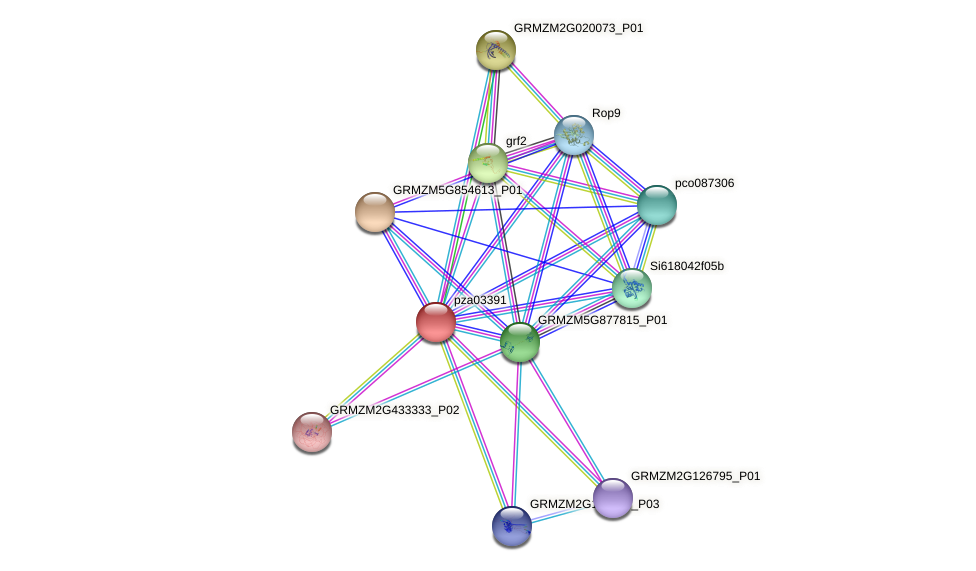 pza03391 protein (Zea mays) - STRING interaction network