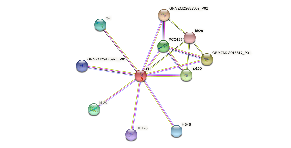 RS1 protein (Zea mays) - STRING interaction network