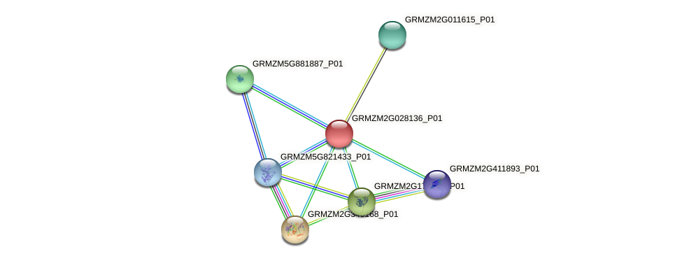 GRMZM2G028136_P01 protein (Zea mays) - STRING interaction network