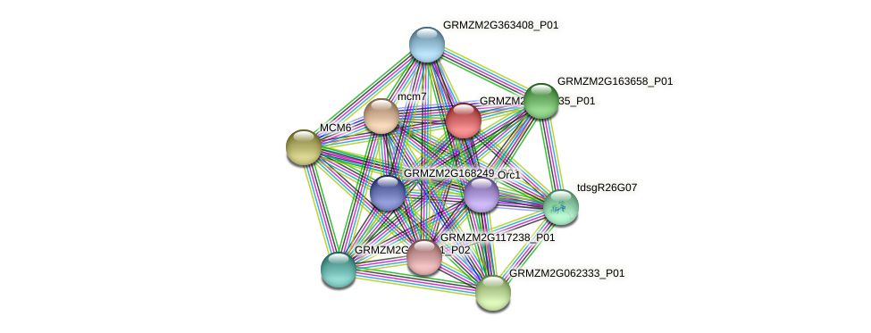 GRMZM2G028335_P01 protein (Zea mays) - STRING interaction network