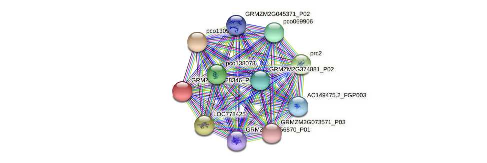 GRMZM2G028346_P01 protein (Zea mays) - STRING interaction network