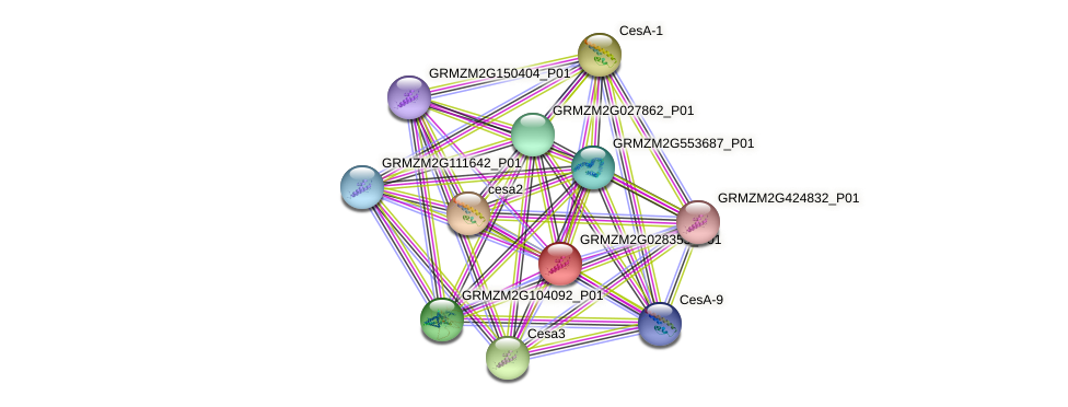 GRMZM2G028353_P01 protein (Zea mays) - STRING interaction network