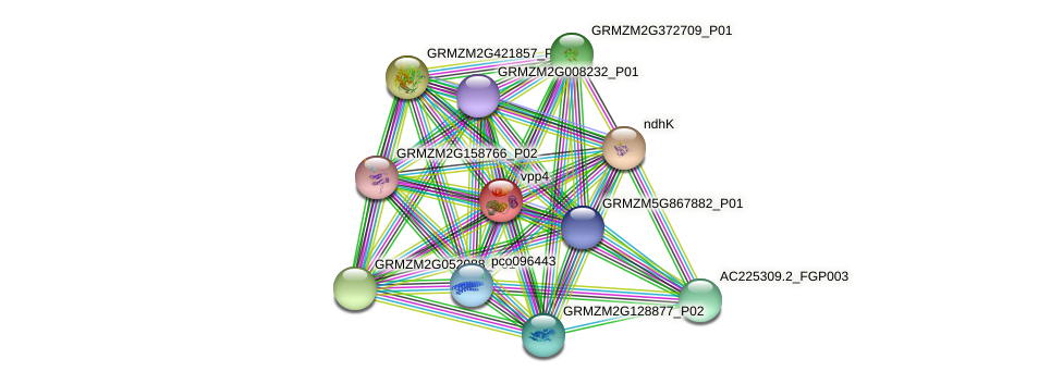 GRMZM2G028432_P01 protein (Zea mays) - STRING interaction network