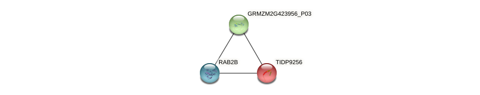 TIDP9256 protein (Zea mays) - STRING interaction network