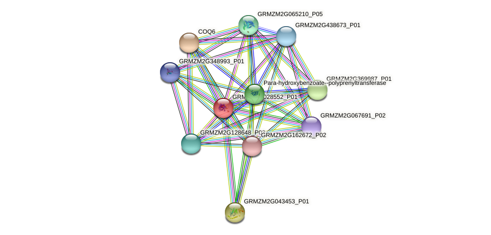 GRMZM2G028552_P01 protein (Zea mays) - STRING interaction network