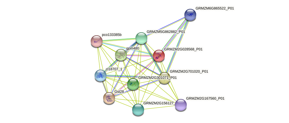 GRMZM2G028568_P01 protein (Zea mays) - STRING interaction network