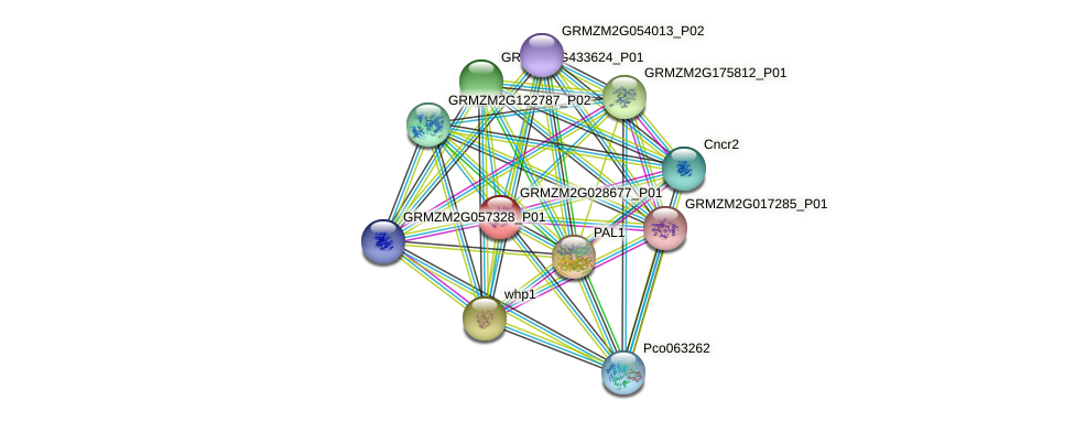 GRMZM2G028677_P01 protein (Zea mays) - STRING interaction network
