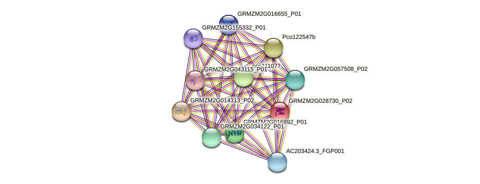 GRMZM2G028730_P02 protein (Zea mays) - STRING interaction network