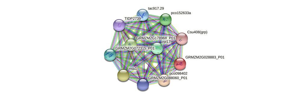 GRMZM2G028883_P01 protein (Zea mays) - STRING interaction network