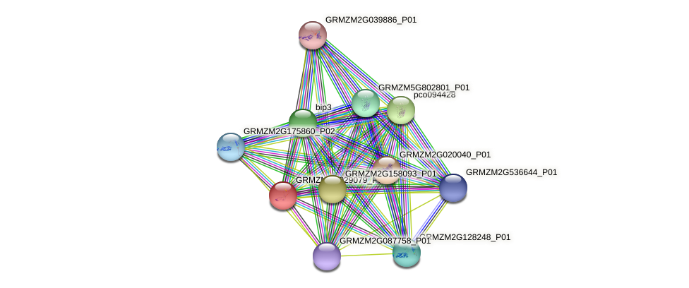 GRMZM2G029079_P01 protein (Zea mays) - STRING interaction network