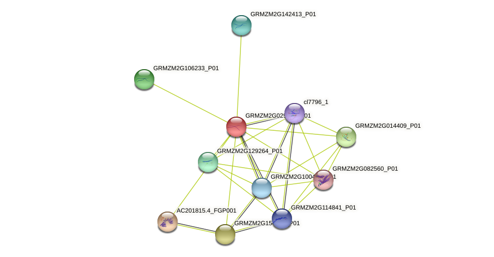 GRMZM2G029082_P01 protein (Zea mays) - STRING interaction network