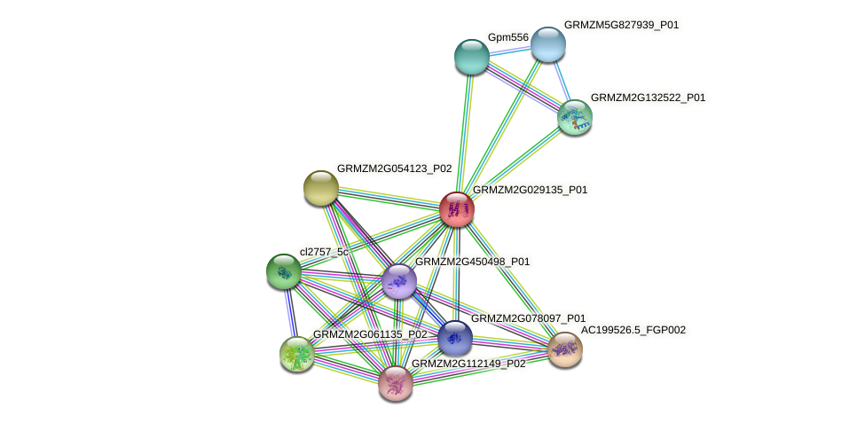 GRMZM2G029135_P01 protein (Zea mays) - STRING interaction network