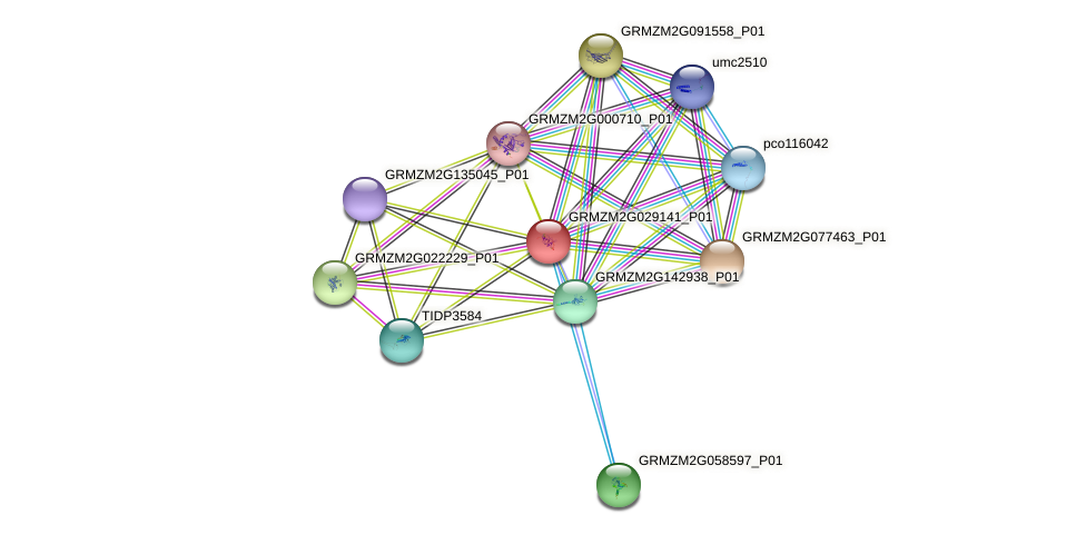 GRMZM2G029141_P01 protein (Zea mays) - STRING interaction network