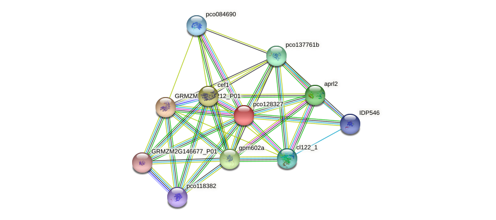 pco128327 protein (Zea mays) - STRING interaction network
