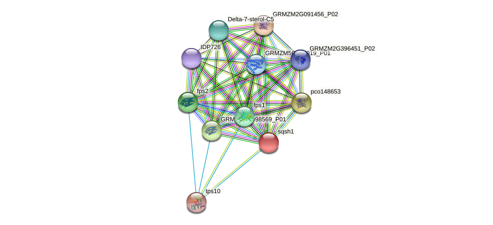 GRMZM2G029396_P01 protein (Zea mays) - STRING interaction network
