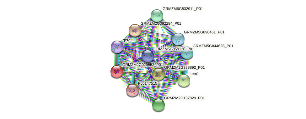 GRMZM2G029552_P01 protein (Zea mays) - STRING interaction network