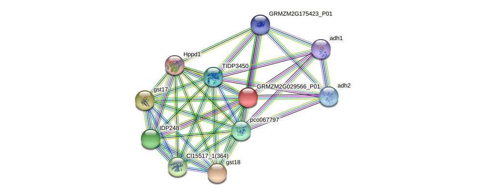 GRMZM2G029566_P01 protein (Zea mays) - STRING interaction network