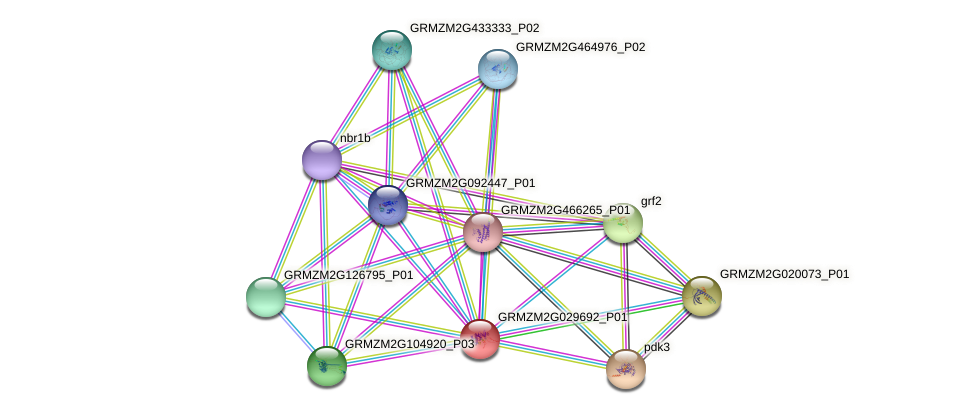 GRMZM2G029692_P01 protein (Zea mays) - STRING interaction network