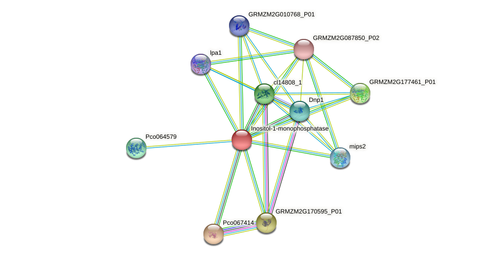 GRMZM2G029731_P01 protein (Zea mays) - STRING interaction network