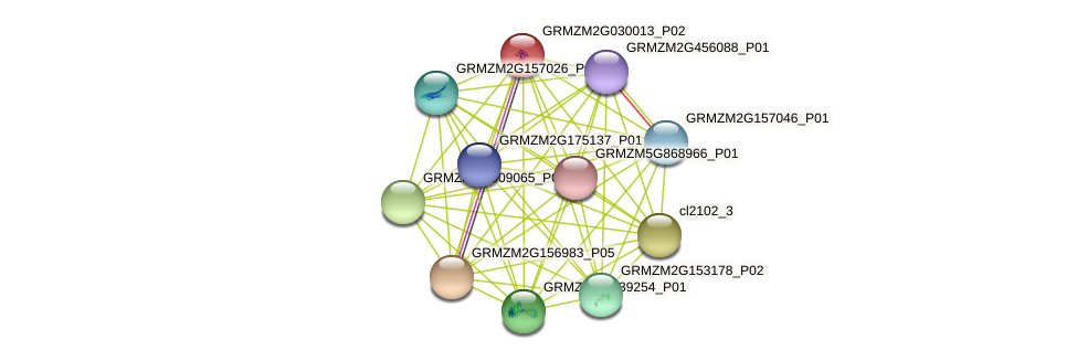 GRMZM2G030013_P02 protein (Zea mays) - STRING interaction network