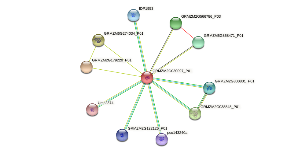 GRMZM2G030097_P01 protein (Zea mays) - STRING interaction network