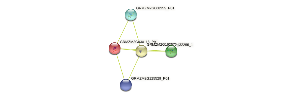 103630273 protein (Zea mays) - STRING interaction network
